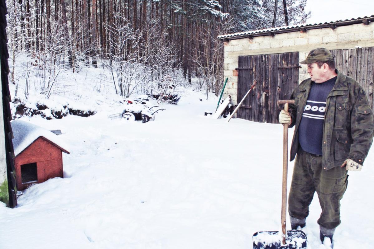 Newsy, Wilki znowu zaatakowały ofiarą padł żyjące drapieżniki groźne ludzi - zdjęcie, fotografia
