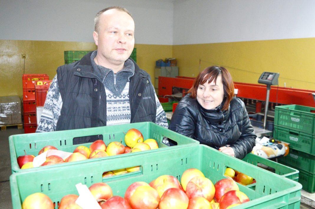 Warzywa, owoce, kwiaty, zioła, wygląda praca sadzie jakie owocowe najlepiej wybierać Pamułowe zdradzają kulisy jabłkowego biznesu - zdjęcie, fotografia