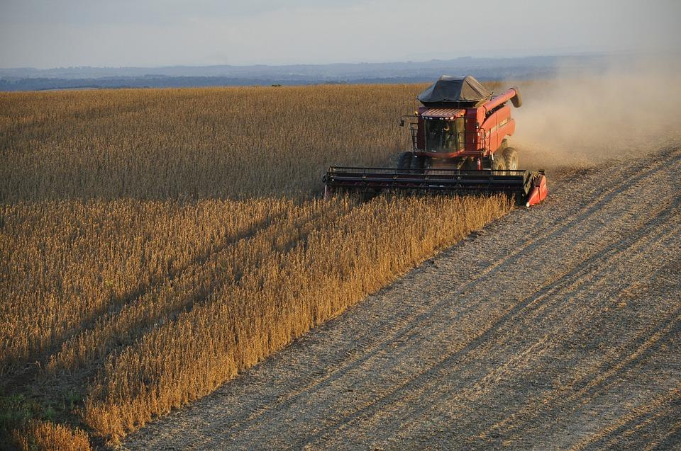 Uprawa, pieniądze rolników Zobacz można dostać dofinansowanie [KOMUNIKAT] - zdjęcie, fotografia