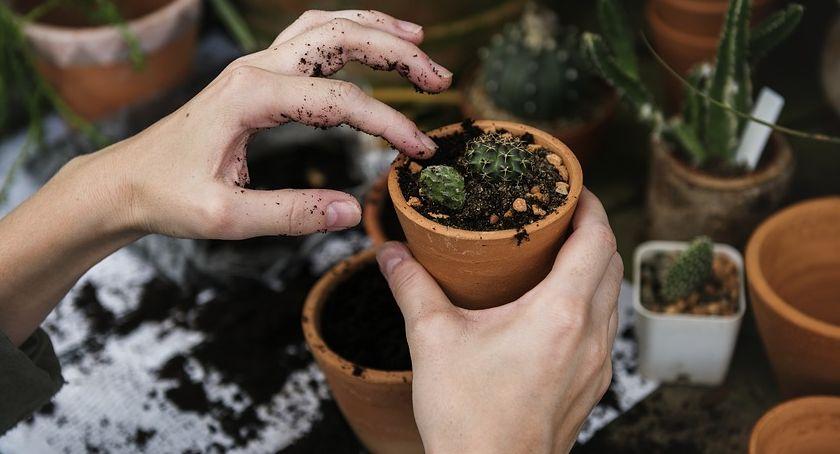 Mieszkanie, dom i ogród, Ogród wiosną Jakie rozsady sadzonki wyhodować samodzielnie - zdjęcie, fotografia