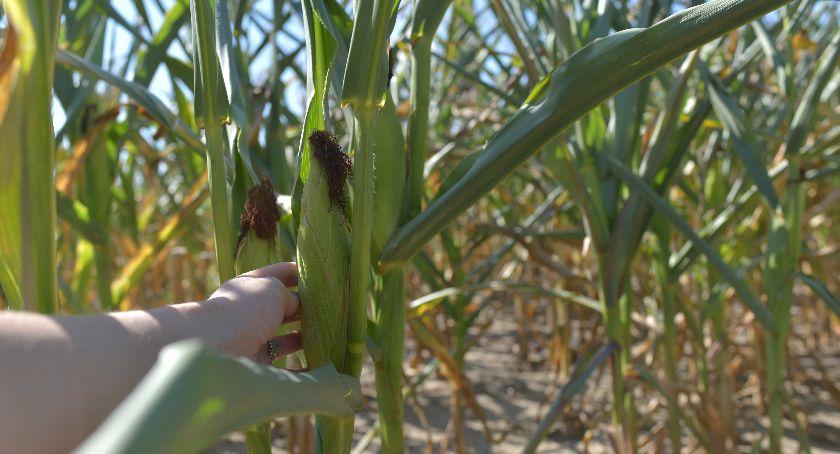 Uprawa, jedzenia zwierząt warzyw susza nadal - zdjęcie, fotografia