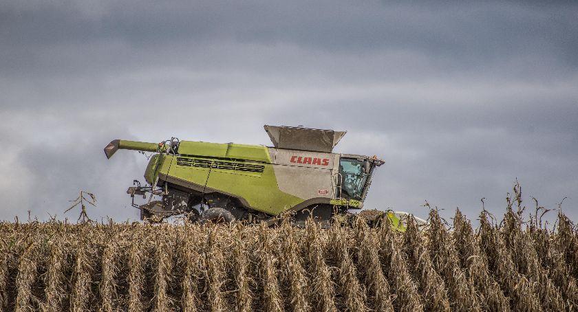 Uprawa, Odszkodowania suszę rolnictwie rolnicy zobaczą - zdjęcie, fotografia