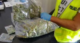 Ćwierć kilograma marihuany ukrył na działce w Świeciu. Teraz grozi mu 10 lat więzienia