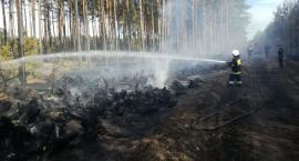 Ogromny pożar w gminie Osie. Zapaliły się hałdy korzeni pozostałe po trąbie powietrznej