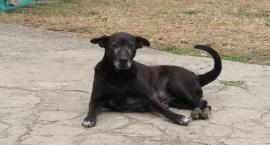 Co zrobić, gdy widzę psa biegającego po ulicy bez właściciela? Gdzie to zgłosić? - pyta czytelnik