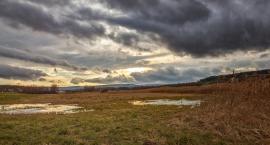 """""""Deszcze były tak ulewne, że zatapiały pola. Takiego roku nie pamiętam"""". Straty wynoszą setki tysięcy złotych"""