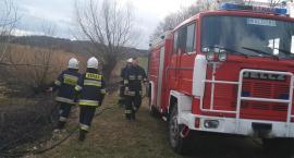 Dzięki ekspresowej akcji spłonęło tylko pół hektara łąki. Strażacy podejrzewają podpalenie