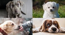 Podatek od psa - czy trzeba jeszcze go płacić? Sprawdzamy gdzie i ile