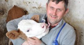 Krystian Gackowski: - Produkcja mleka daje pewny dochód i jest dość opłacalna. Po ile gospodarz sprzedaje mleko?