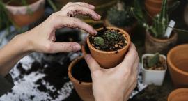 Ogród wiosną. Jakie rozsady i sadzonki wyhodować samodzielnie?