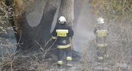 Strażacy  walczyli z ogniem przez blisko godzinę. Znowu podpalenie?