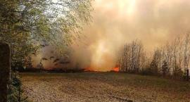 Pożar w gminie Jeżewo, mamy nowe informacje. Na miejscu jest 50 jednostek straży [ZDJĘCIA]