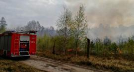 Kolejne pożary w powiecie świeckim. Palił się tartak w Warlubiu i las w Gajewie