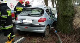 W marcu na tej drodze doszło do śmiertelnego wypadku. Czy te drzewa trzeba wyciąć?
