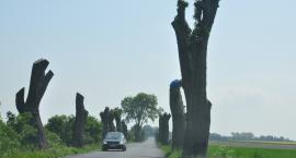 Pozostałości drzew wyglądają strasznie, ale stoją tak od miesięcy. Drogowcy wzruszają ramionami i odpowiadają, że tak na razie zostanie