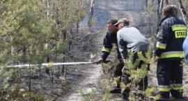 Zakaz wstępu do lasów, także na terenie powiatu świeckiego