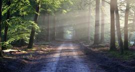Zakaz wstępu do lasów. Wszystko przez opryski