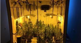 Plantacja marihuany w mieszkaniu. Profesjonalnie urządził ją 20-latek