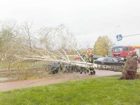Interwencje, Zerwane dachy powalone drzewa - zdjęcie, fotografia