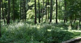 Park zamieni się w las