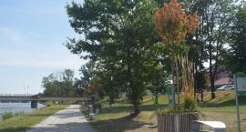 Uschnięte drzewa, wypłowiałe bulwary