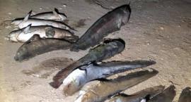 Katastrofa ekologiczna. Czy rzeka jest zatruta?