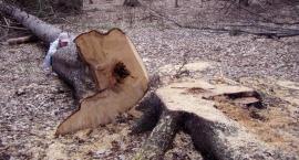 Park miejski w Nysie: Wytną pół tysiąca drzew