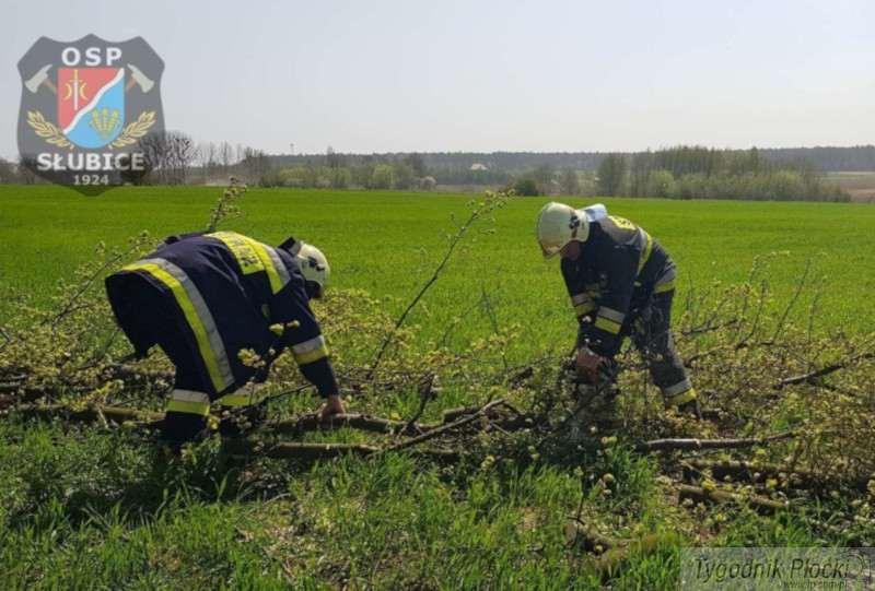 Pożary - interwencje straży  , interwencje straży pożarnej pożary uszkodzone dachy połamane drzewa - zdjęcie, fotografia