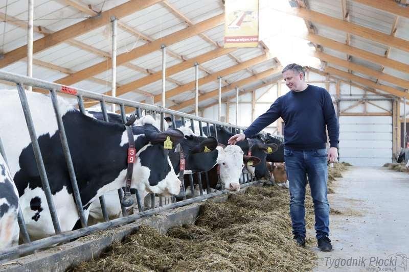 Wieś i rolnictwo, krowy Roboty! - zdjęcie, fotografia