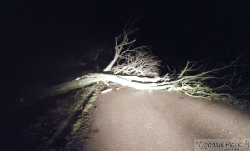 Inne zdarzenia, Powalone drzewa uszkodzone dachy linie energetyczne - zdjęcie, fotografia