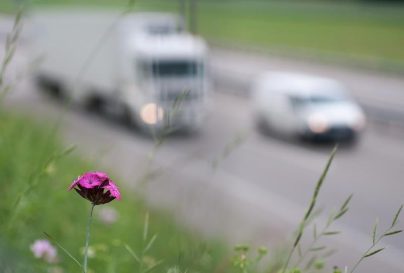 """Wiadomości, """"Smog"""" drogach Trwają policyjne kontrole - zdjęcie, fotografia"""