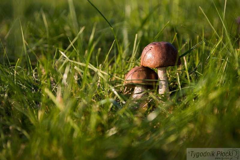 Osoby poszukiwane, Policjanci odnaleźli zagubionego grzybiarza - zdjęcie, fotografia