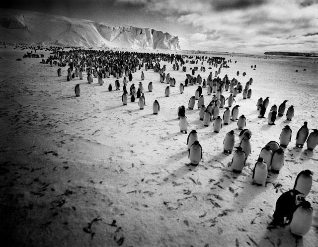 Wystawy, Fotografie Tomasza Gudzowatego - zdjęcie, fotografia