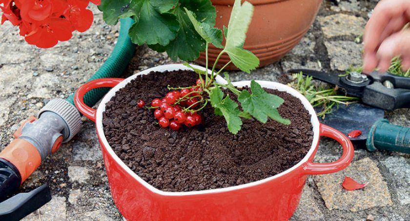 Przepisy kulinarne, Miniona potęga ogrodów - zdjęcie, fotografia