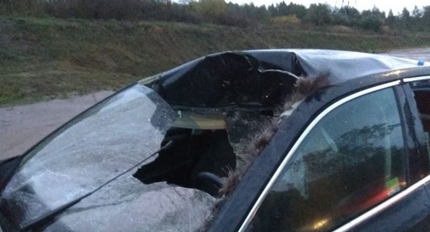 Wypadki drogowe, Łoś spowodował wypadek Coraz więcej zwierząt ruchliwych drogach - zdjęcie, fotografia