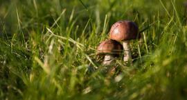 Policjanci odnaleźli zagubionego grzybiarza