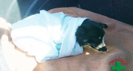 Wędkarze uratowali tonącego psa