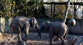 Nadaj imię słoniowi