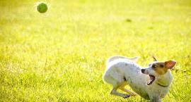 Pieska sobota przy ORLEN Arenie