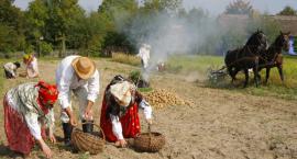 Coroczne święto ziemniaków. W niedzielę w Sierpcu