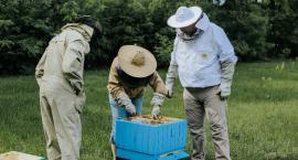 Pasieka z milionem pszczół