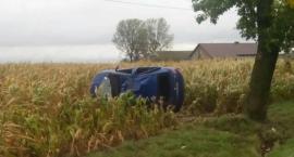 Dachowanie na polu kukurydzy