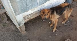 Uratowali 11 psów przed śmiercią głodową. Teraz potrzebują pomocy
