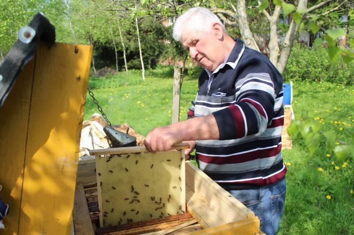 Interwencje, Oprysk zabił tysiące pszczół - zdjęcie, fotografia