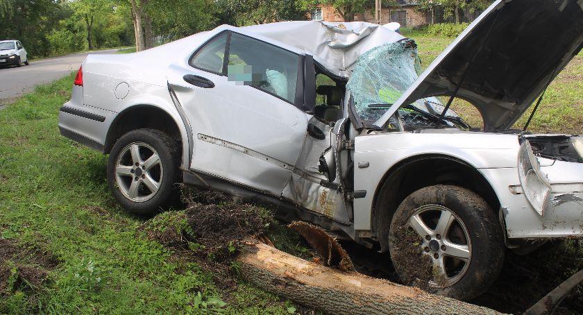 Wypadki, Ściął drzewo samochodem - zdjęcie, fotografia