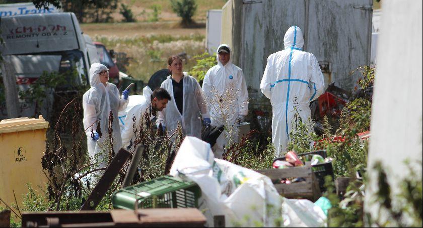 Interwencje, Cztery świniodziki zostały zabite - zdjęcie, fotografia