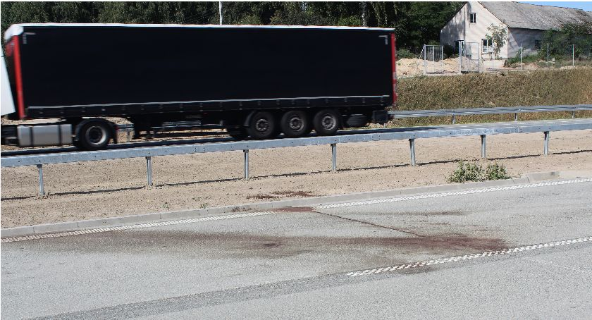 Wypadki, Łosie drodze Obwodnica niebezpieczna kierowców - zdjęcie, fotografia