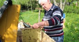 Oprysk zabił tysiące pszczół