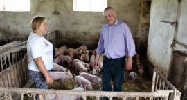 Wirus afrykańskiego pomoru świń coraz bliżej