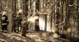 Strażacy w akcji. Pożar poszycia leśnego w Sędowicach (fotorelacja)